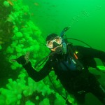 diver and anemones