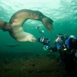 bob with sealion, diver and sealion