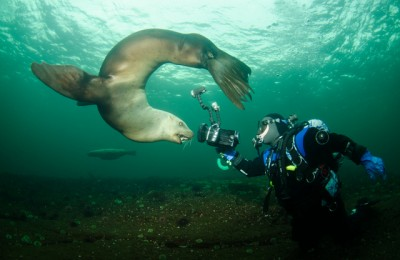bob with sealion, diver and sealion