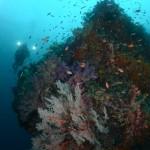 diver, diver and corals