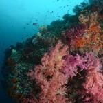 misool reef, raja ampat