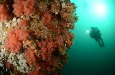 diver on strawberry wall, diver in cold water