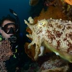 diver with cuttle fish